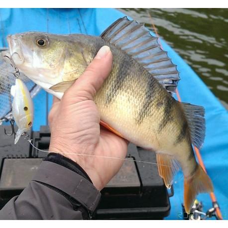 Vision Fish Cammo Slim Line Poche Salmon Tube Mouche Box 2 Taille Options