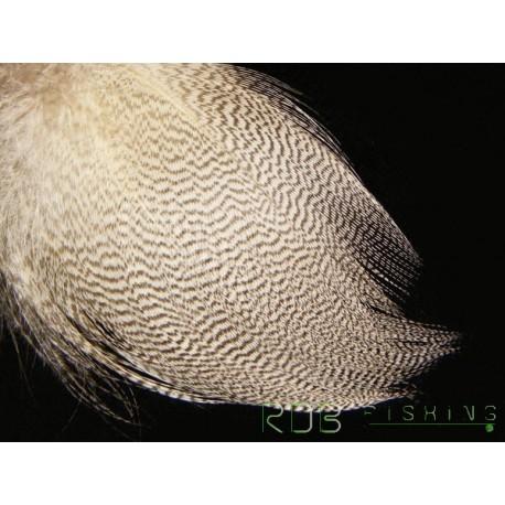 Plume de flanc de canard Mallard (colvert)