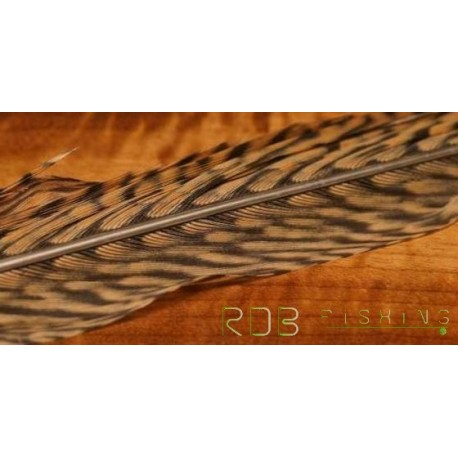 Portion de plume de queue de faisan doré