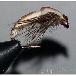 Nymphe RDB Ammonite nymphe