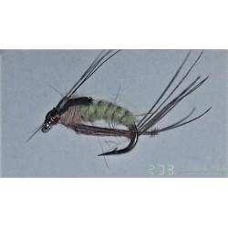 Rhyacophila Caddis Pupa