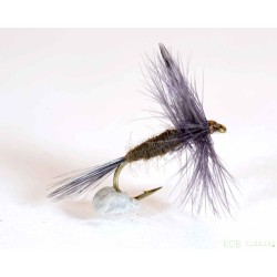 Blue Winged Olive (BWO)