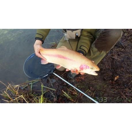 Journée de pêche à la mouche au réservoir du Martinet avec RDB Fishing truite aguabonita