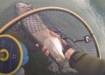 Week-end de pêche à la mouche en réservoir